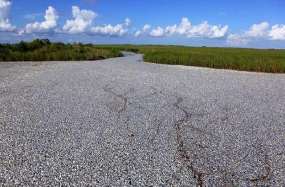 The Earth Organization Gulf Oil Spill Soluton Campaign